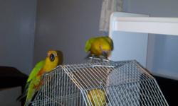AMAZING DEAL!!! I have two 25 week old lovely Baby Jenday Conure Parrots. COLOURFUL & Very Smart. Recently Purchased for $1500 but am moving overseas for work and cannot take them with me. Custom Built cage with tiles & marble for easy cleaning. Both