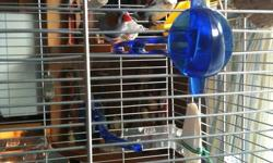 I have 2 beautiful finches with a large Vision cage and all accessories. Quiet,like to watch you,very silly birds.