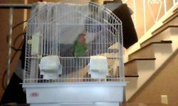 Hello i have two tamed love birds with cage. The names are Kiwi And Peaches. they are very smart birds they are very nippy at first but will calm down when they get to know you. Need LOTS of attention in order for them to know you. very playful please