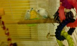 Asking $100.00 for both birds and the cage and any food and supplies we have left. This doesn't even cover the cost of the cage itself....The birds are not hand tamed, but are very attached to each other. Please don't e-mail as I don't check often. Give