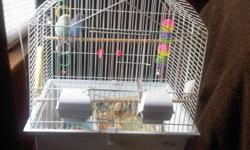 male and female budgie, male dark blue female light blue and yellow. 10 each and 30 for cage. Also comes with some food, toys, treats, and calcium&minerals.