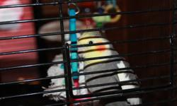 "I have 2 cockatiels with a nice cage, toys, full bag of food, millet sprays, and bird grit. They are aprox. 9 months old, not ""tame"" so to say but also not mean or timid they are very ""interested"" in engaging in conversation and socialization, and are"