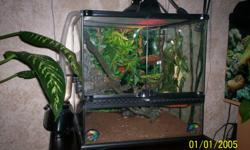 i have 2 crested geckos for sale includes terranium , floating rocks ,mister ,heating lamp all accessories for 275.00call for more info 6610575