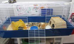 We currently have 2 female long haired guinea pigs that we need to find a home for. They are 8 months old and are sisters, one is caramel and white the other is dark brown and white. They must go together,they will also come with a large cage and all the