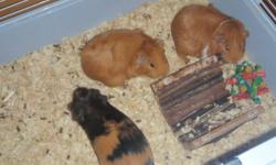 I have 2 female guinea pigs,cage an all the assesories..I want 80.00 for all.Reason for selling I am moving and can't keep them..Please call 794-9479...