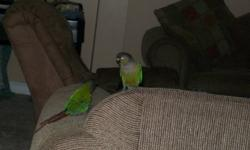 hey i am selling two green cheeked conures for 500 dollars with cage and small swing for the birds.