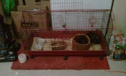 two male guinea pigs, large cage, accessories, food. Asking $150 or best offer.