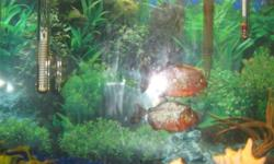 Hello, I am selling 2 healthy red bellied piranhas. They are about 9 months old now and are very healthy. I am selling them because I am moving and can't take them with me. Please contact me back as soon as possible if interested thanks.