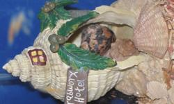 We have two hermit crabs (purchased at PetSmart in August and October 2009) available for a new home.  They are hardy creatures, and easy to take care of.  Asking price of $20.00  or best offer includes 2 half full containers of food, vitamin drops for
