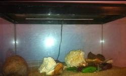 2 large hemit crabs with everything needed. 20 gallon tank shelters dishes spray bottles food and climbing items This ad was posted with the Kijiji Classifieds app.