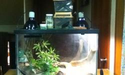 2 leopard geckos for sale, comes with Leopard geckos x2 Light Heater Big terrarium Climbing sticks Fake plant Cricket keeper x2 Cricket feed Reptile calcium powder Asking 200$ This ad was posted with the Kijiji Classifieds app.