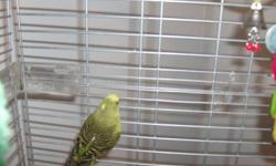 1 green, 1 blue male budgies - 2 years old.  NOT HAND TRAINED, They come with their cage, toys and food. Serious inquiries only please.  Already extremely hard to let them go.  Moving into a small space in Toronto and can not bring them with me. Thank