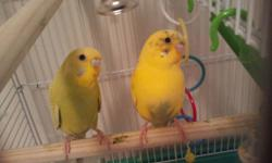 I have two parakeets with brand new cage and food etc. I bought everything 3 weeks ago and know longer have the time for them, one is female and the other is male. 75 for everything.