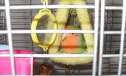 We are selling our 2 lovebirds because they are too agressive with our 20 month old daughter, they need more time out of the cages. They come with 2 cages, toys, food, shavings. Molly will be 4 on Dec 1st and Bells is a little over a year old. Must pick