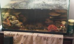 Hello,   I have 2 turtles for sales. This sales includes a 56 gallon tank. 3 1/2 ft in lengeth, 2 1/2 ft in width, and 2 ft in height. Also, included is two can of turtle pellets, a uv light, a flu vale filter, and a heater, a pum and extra small tank to