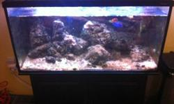 2 x 55 gallon saltwater fish tanks including coral for sale. Please contact Cindy by email for more information. This ad was posted with the Kijiji Classifieds app.