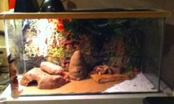 I have two geckos for sale-they are really good with kids. My kids held them alot and my classroom took care of them for a few months.Call 244-5594 or text 290-2938 if interested.We would like them to go to a good home! Thanks This ad was posted with the