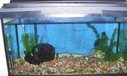 30 gallon fish tank with new filter & hood light comes with everything including a very good looking, beautiful color female convict cichlid and her thirteen babies not big enough to rehome yet but healthy asking 100 for all OBO looks much better in