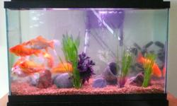 30 Gal Tank, with pump/filter, light & accessories; heater, gravel, plants, rocks etc. Water changer/gravel cleaner (marina aqua vac) with 25' hose. 8 Goldfish Retail cost $330 $150 the lot. Pickup only.