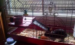 I have a small dark brown rabbit with white underneath for sale, he comes with a brand new red 2 level cage purchased a week ago at petsmart, a full bag or shavings, 2 bags of food, 1 bag of pet bedding, 1 bag of hay, 1 bag of alfalfa hay chunks, a water