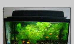 I have 45-50 G fish tank for sale. It comes with gravel , light, heater, 300$ or best offer This ad was posted with the Kijiji Classifieds app.
