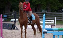 Tommy is a beautiful 4 year old Trekehner Gelding with beautiful movement and potential to the moon. He is currently w/t/c , and started over small jumps. Can jump the moon, and has beautiful movement Trailers well, good for the vet and ferrier. No buck ,