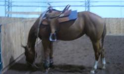 "4 yr old pleasure mare, reg app, would excel in western or english pleasure, sound no vices, she is only started but if rode for the winter would be ready for the next show season, she has "" the dream"" "" dreamfinder"" "" royce redford"" all on the top and """