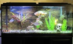 50 Gallon Fish Tank with Rena Filstar XP3 Filtration System Includes: - 9 Fresh Water Fish: - 2 Checker Barbs, 2 Clown Loachs, 1 Convict Cichlid, 1 Firemouth Cichlid, 1 Jack Dempsey Cichlid, 1 Oscar, 1 Plecostomus - Filtration System, (alone is worth