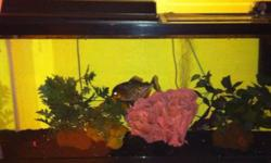Fish tank 55 gal. With stand and all accessories And 3 piranhas $275 Barrie This ad was posted with the Kijiji Classifieds app.