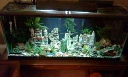 -55 Gallons. -Some healthy fish (3 congo tetra , serpae tetra, cigar shark, i.d. shark, 3 plecos ). - Castles(one of the big ones is not for sale),accessories, some rocks, gravel, lots of plants(fake, not live) -Water treatments, heaters, filters, air
