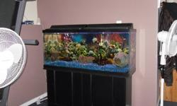 I HAVE A 55 GALLON FISH TANK FOR SALE,IT INCLUDES 4 CHICLID FISH AND 2 PLECKOS AND ALL ACCESORIES TO GO WITH IT INCLUDING STAND WITH 2 STORAGE COMPARTMENTS.$ 300.00 OBO CALL JEFF AT 403-309-3523 TKS