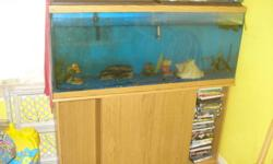 """i am seeling my tank plus stand...comes with filter rocks decorations and 2 bala sharks..there about 8-9"""" long...we just have no time to clean there tank anymore...not surehow old it is..but does not leak and not cracked..."""