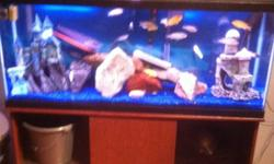 Tank n stand r just over a year old in great shape no leaks comes with everything u need has a underground filter keeps the tank good n clean little maitence to keep this tank going I'm asking 300. Firm all the fish would cost u that much is a good deal