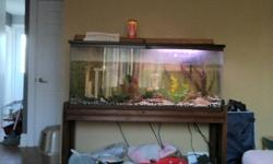 i am selling a 55gl fish tank and accessories with some fish for 200 obo please call miranda or ryan at 289-296-7033