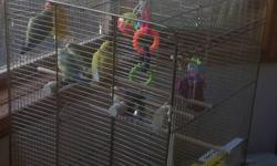 Hey everyone, I have five baby lovebirds All were born first week of Sept 2011. Two are mix color ( green, yellow and purple tail) Two are complete yellow with peach face One is complete yellow with white face (very cute must see) if you more than one