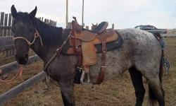 5 year old well broke, well bred registered quarter horse mare. This mare is very smart and willing. She has been to the mountains and to poker rallies, ridden inside and outside. Crosses water, mud and bridges with ease. She is very soft and supple with