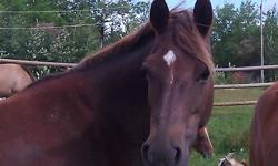 I am posting this ad for someone else.  The information I have is as follows:   5 Year old grade qh mare for sale.  This mare has had 1 foal in the past and the filly has gone on to be a very good ranch horse.  This mare has great conformation, excellent