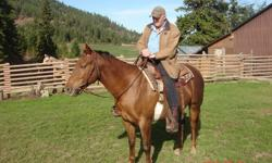Hollywoods Centurion (AKA: Holly) is AQHA registered. Her sire is Dot Hollywood Jessie with greats such as Hollywood Dun It and Hollywood Jac 86. Her dam is Commanding Swing from Centurion Commad, Fritz Command breeding. Holly is a nice looking chestnut