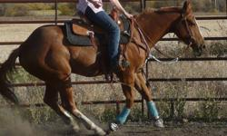 Ima Rugged Sailor , coming 5 year old registered sorrel quarter horse gelding. with Rugged Lark a 2 time super horse on his papers.  He has been good in the arena, good stops and turns. Good on trail rides, been ridden out in the dark too and he was fine.