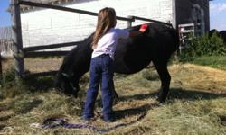 5 year old black miniature stud pony. Halter broke. Leads great. Used to kids and other pets. Well mannered. 587-2878