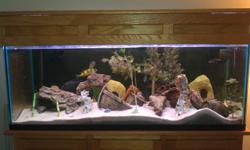 66 gallon Aquarium, comes with the following: -Custom built oak stand & canopy -Hagen GLO T5 High Output Lighting system -Marineland C360 Canister Filter -50' Substrate Vacuum (Connects to sink for easy water changes) -Assorted Med/Large African Cichlids