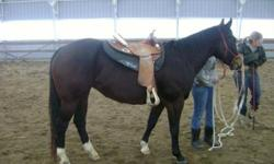 Dont miss out on this mare. She is Beautiful, Very well put together, and very Loving. She has a nice start on Barrels but not to much that you can't make her your own. She is going very well in poles just needs to be hauled. I havent even touched on her