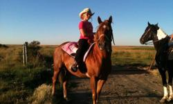 Secret has the build, mentality and speed of a barrel horse. she is 14.3hh, great on trails. A bit too much horse for the young green owner so she is up for sale. More pictures and info upon request! Dont miss out on this great little mare! she will take