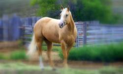 6 yr old palomino mare , with quite a bit of professional training. located in Kamloops.for more info please call 250-573-4389 or cell 250-319-8258 and ask for Luigi, Emailing this add back will get you no info, Thanks