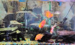 """$300.00 OBO -70 gallon aquarium; 4 ft. L, 21"""" H, 12.5"""" W  -3 parrot cichlids -2 firebelly cichlids -1 geophagus cichlid -1 large gold  fish -1 plecostamus -1 electric yellow cichlid Includes 4 mth old Eheim Ecco pro, energy saving, quiet outside of tank"""