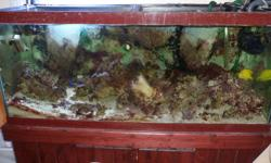 """75 gal reef saltwater tank for sale complete with solid wood cherry stand, filters, lights, and accessories. Also includes: Yellow Tang Blue Damsel 80 lbs live rock large Anenome various corals tank and stand measurements: 20"""" deep x 50"""" wide x 48.5"""""""