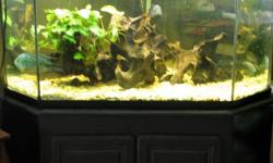 I have a 75 Gallon diamond shaped corner aquarium for sale. Complete set up with Tank, Black cabinet style stand (extremely sturdy)  glass top, light, Rena Filstar xp3 Canister Filter, Heater, Hose that hooks up to your sink for water changes, Net,