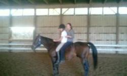 Selling my Quarter Horse hes 15'1-15'2, thick build, rides western, neck reins, rides bare back,  leads on trails, great in the arena, 24/7 turn out, w/t/c very sweet and affectionate, cross ties, loves attention comes right to you in the field, no buck
