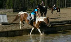 Dewi is a wonderful mare I have had since she was 6 months old. She will be 7 years old on January 21, 2012. This mare has a beautiful temperment, great bone, 16 hh, UTD on feet, dewormer, shots and is having her teeth floated in 3 days. She is well