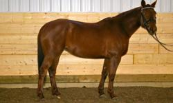 Name: Marzzipan DOB: April 30, 2004 Colour: Chestnut Breed: American Trakehner Association Sex: Mare Height: 16hh Marzzipan is an athletic, big bodied mare, has basic first level dressage. Solid walk, trot, canter, lovely free walk, good transitions.  She